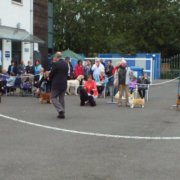A general view of Best In Show judging