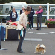 Toy Group Winner - Jotolemar Show Stopper With Dacatelo SH CM (Chihuahua (Long Coat))