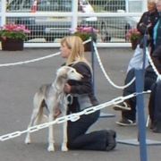 Hound Group Winner - Ruweis Thamiin (Saluki)