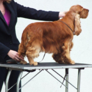 Gundog Group Winner - Lynwater Red Kite (Cocker Spaniel)